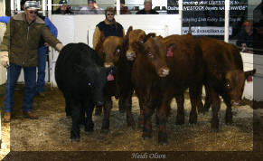 2007 Bull Days Show Case--Sterling, Stockton, Ace, Stonie, Sherman