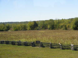 Famous Corn Field of the Wilson's Creek Battlefield