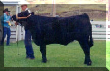 Trey & his 3rd place steer at 1999 Wibaux 4H Fair, out of #308 & Big Sky Marathon 22E