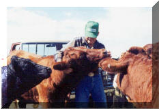 "Bobbie & our ""Wild Salers"", summer 2000"